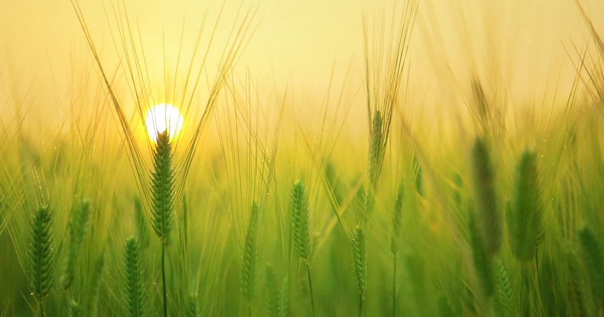 Aquecimento solar na agroindústria: um mercado em expansão!